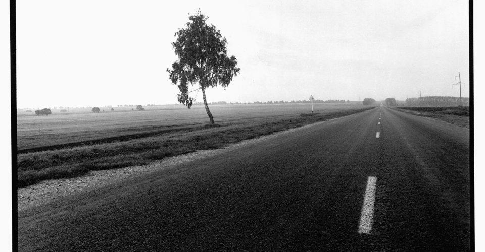 """A. Liepiņš, """"Krievija. Ceļmalas bērzs pusceļā starp Rjazaņu un Skopinu."""", 1997. gads"""